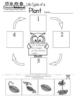 Life Cycle of a Plant Worksheet