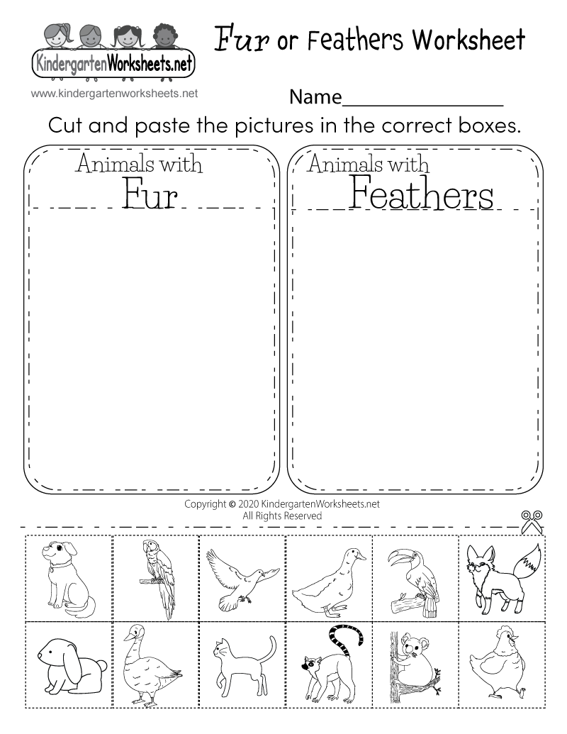 Fur or Feathers Worksheet for Kindergarten - Life Science